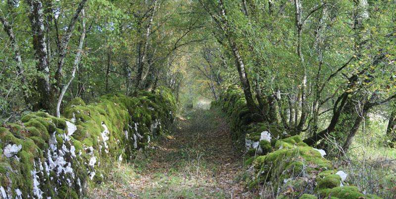 path woods causse de quercy