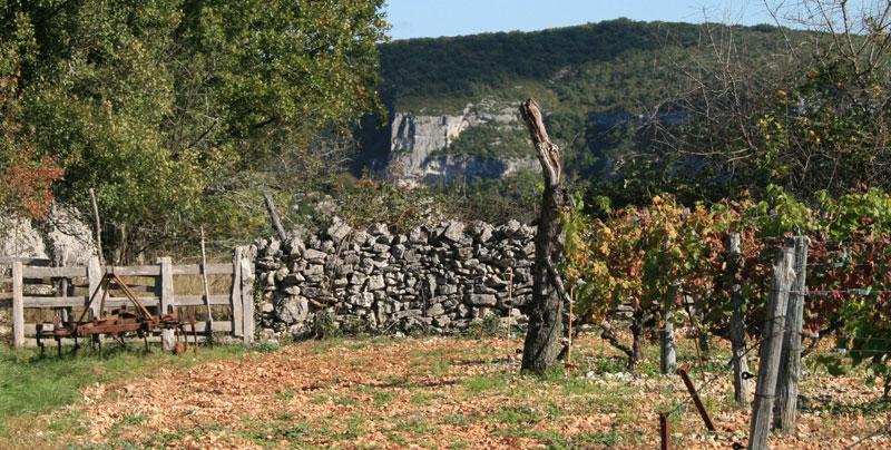 vines-lot800