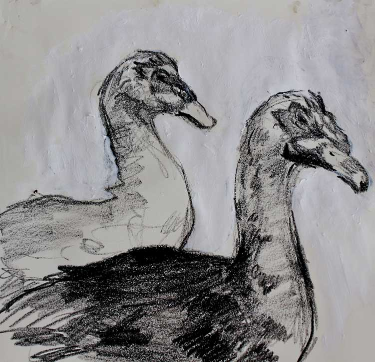 double-duck750