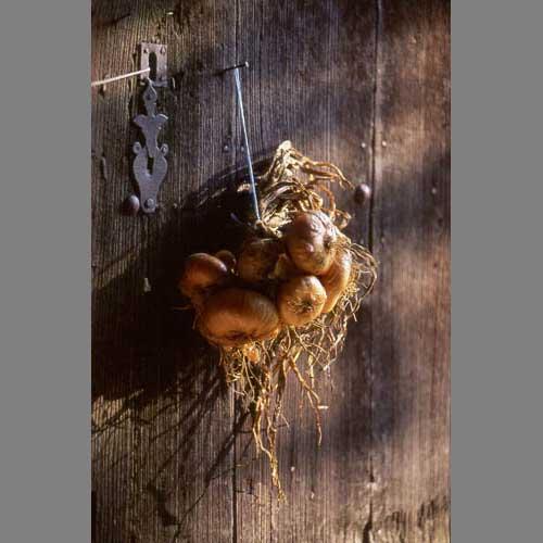 Oignons - © Beatrice Mollaret