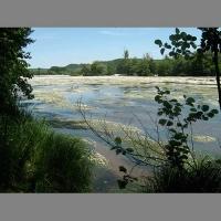 River Dordogne in Flower