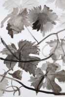 Vines by Tomi