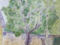 Tree in the Village' by Alan. Watercolour.