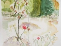 'The Rose Garden at Beduer' Wet on wet watercolour.