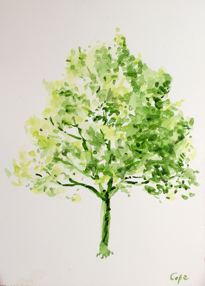 'Lime Tree in the Lot' Demonstration piece. Watercolour 30 x 40 cm. Available