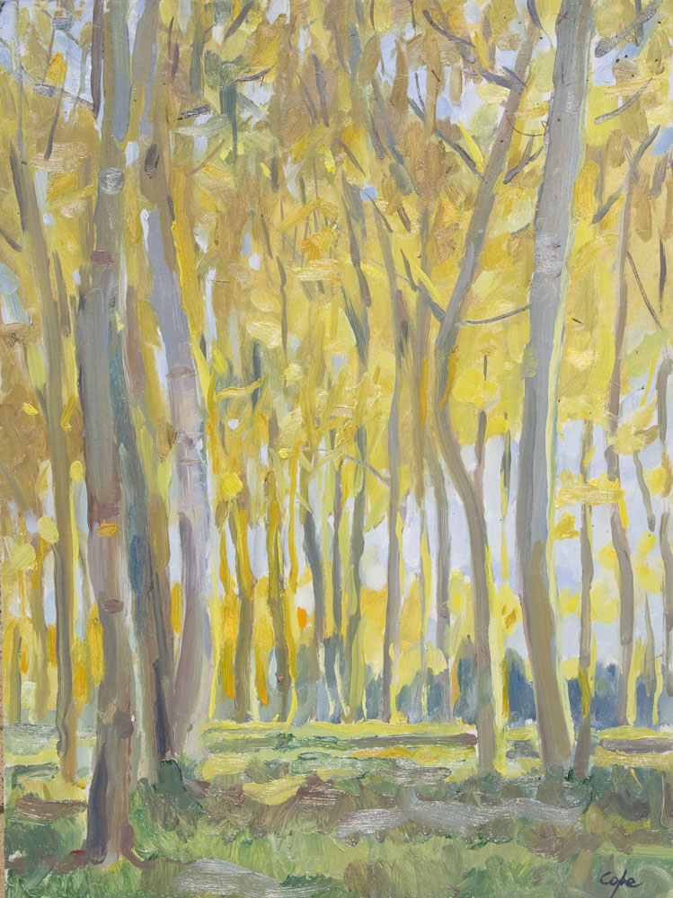 'Poplars - Late Afternoon' Oil on Panel, 30 x 40 cm