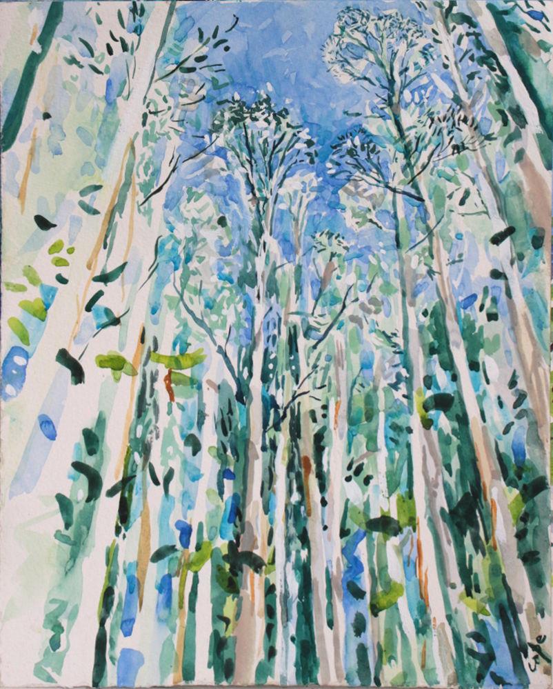 'Eucalyptus Forest' Watercolour. 38 x 28 cm. Available