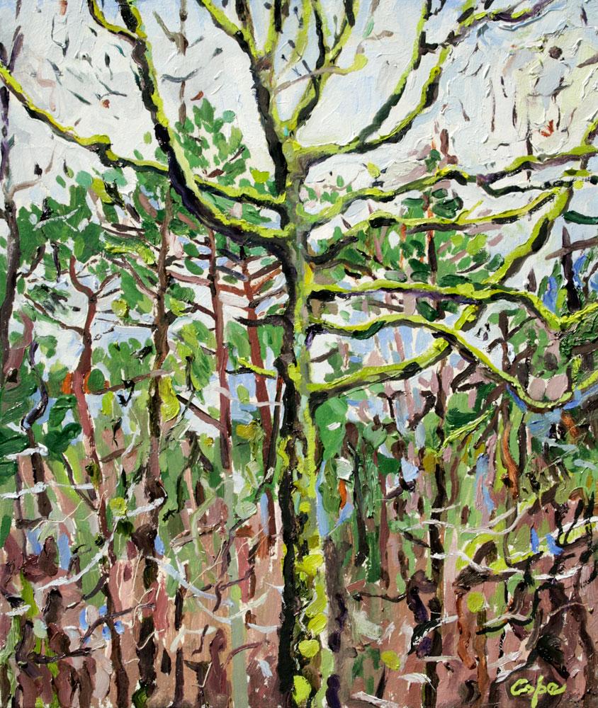 'Oak & Pines' Oil on canvas. 46 x 38 cm