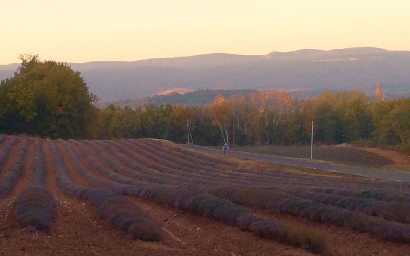 sunset lavendar fields autmn provence