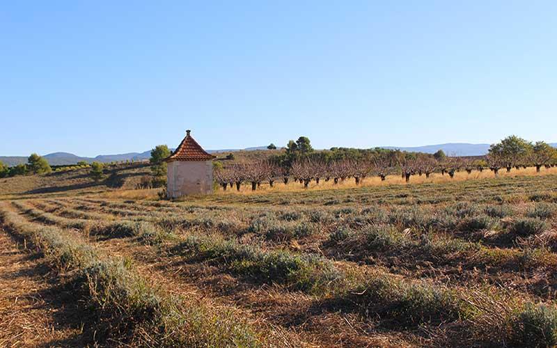 pidgeomier lavendar provence