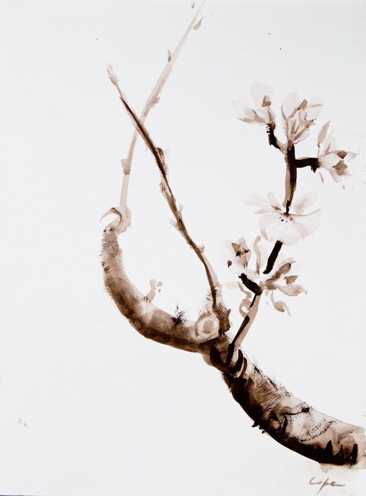 sumi-e,watercolour,free,botanical painting, loose, brush strokes