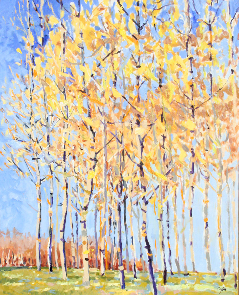 golden poplars, trees atumn,landscape, colourful, automn