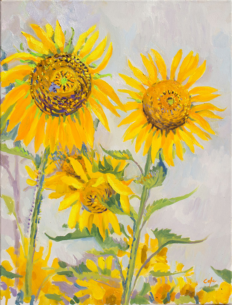 sunflowers in the field, oil painting, alla prima, plein air, south france