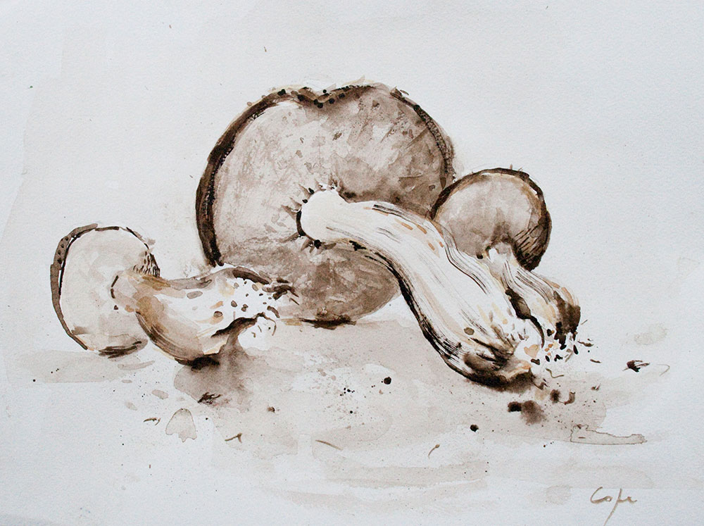cepes, champignon aquarelle, sumi-e, sepia watercolour, penny bun, wood mushroom, painting
