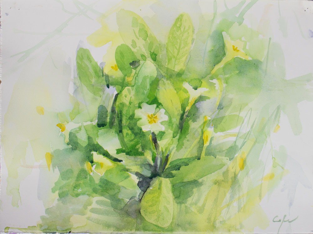 watercolour spring flowers primroses