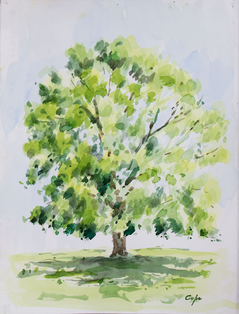 watercolour, lime tree,