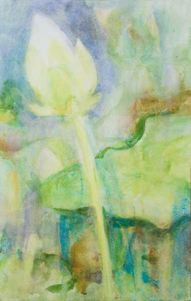 lotus,flower bud,watercolour,wet on wet, white lotus,pond