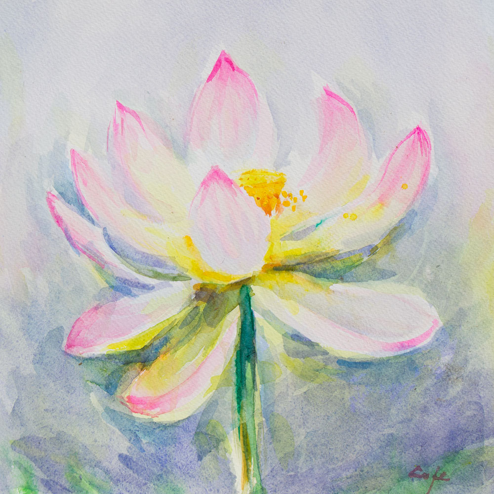 Lotus,Nelumbo Nucifera,watercolour,luminous,flower,light,spectral