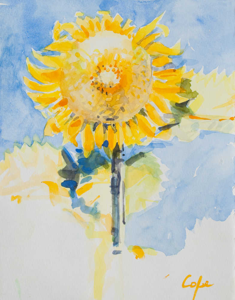 watercolour,sunflower, adam cope