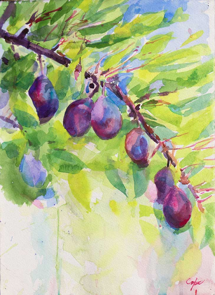 plum,pruneaux dagen,aquarelle,watercolor, tree,colour