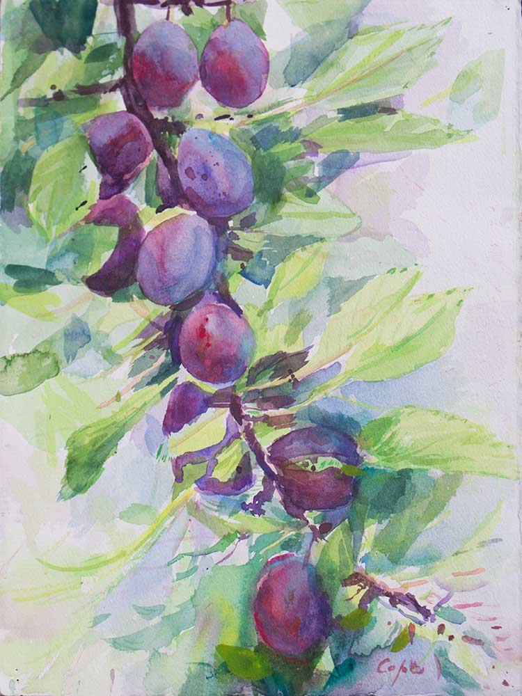 watercolour,plum tree, wet on wet,colourist,expressive