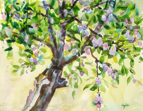 watercolour, prune agen,plum tree, fruit,aquarelle,arbre fruitier