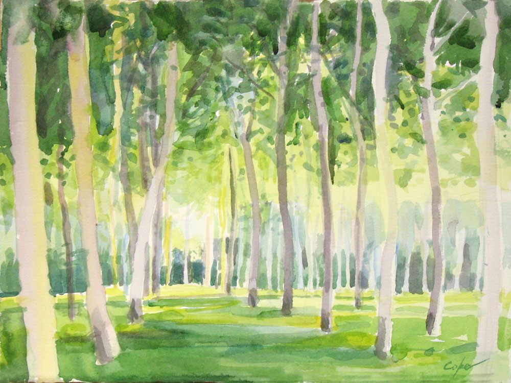 poplars, semi-abstract,watercolour,green,aquiqtine, france