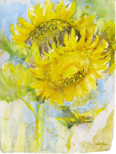 Sunflowers,aquraelle,  in field alla prima ,plein air, watercolour