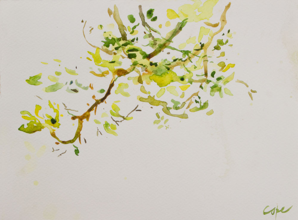 Walnut Branch,  Watercolour, contemporary zen painting, loose plein air