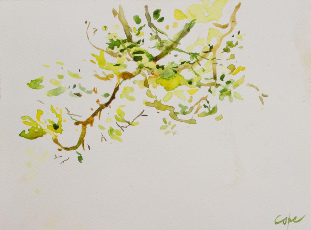aquarelle,sumi-e, noix,abres,zen calligraphy,brush strokes