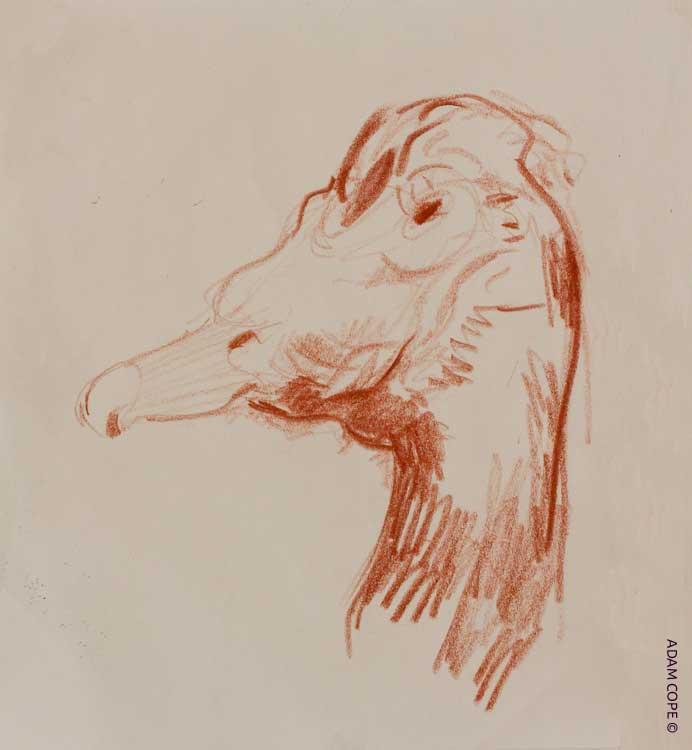 sanguine drawing ducks head