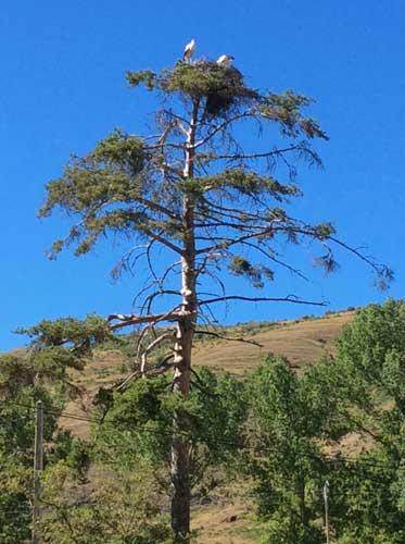 storks, tree